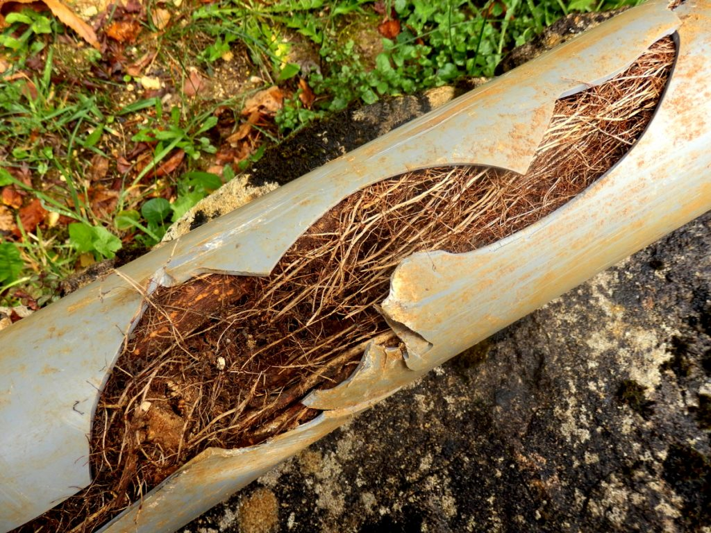 broken sewer line from roots